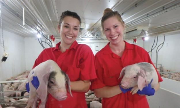 Pig Hill - Điểm nhấn chăn nuôi heo