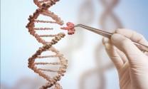 Áp dụng các nghiên cứu công nghệ gen trong chăn nuôi