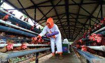 Indonesia: Xuất khẩu sản phẩm chăn nuôi sang 100 quốc gia