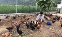 Hà Giang: Nuôi gà và cá thu nhập cao