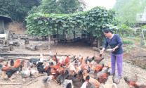 Hà Giang: Phụ nữ thành phố liên kết phát triển kinh tế