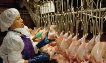 Thị trường chăn nuôi sẽ khó khăn vì COVID-19