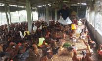 Quảng Bình: Phát triển chăn nuôi bền vững